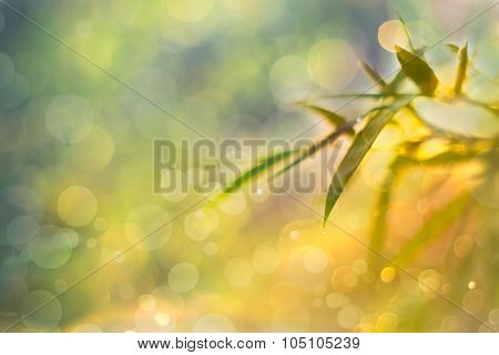 Twinkling Lights Vivid Blurred Bokeh Abstract Background