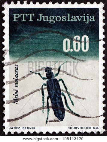 Postage Stamp Yugoslavia 1966 Violet Oil Beetle