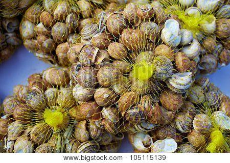 Snails in mesh grid net bag as food in Mediterranean Spain