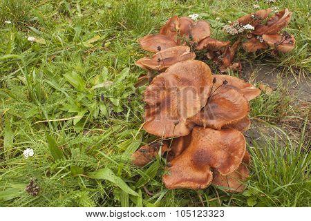 Mushrooms growing on an old tree stump.