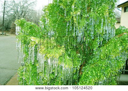 icicles or frozen water on the green tree