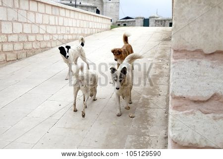 Homeless Dogs In The City
