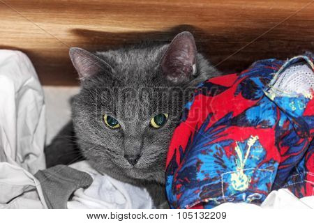 Grey Cat Hid On Shelf