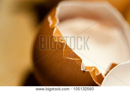 Macro Of Edge Of Empty Cracked Brown Egg Shell