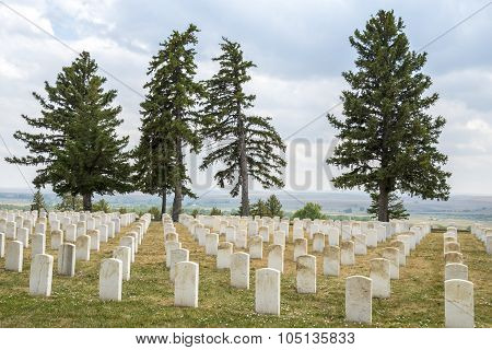 Four Trees Guard Tombstones