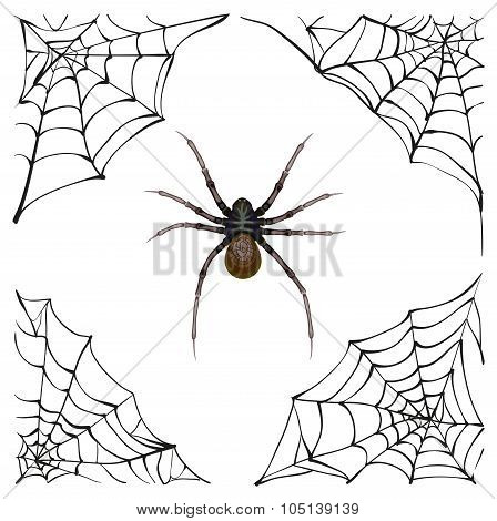 Spiderweb. Big spider web. Scary spider of web. Poison spider