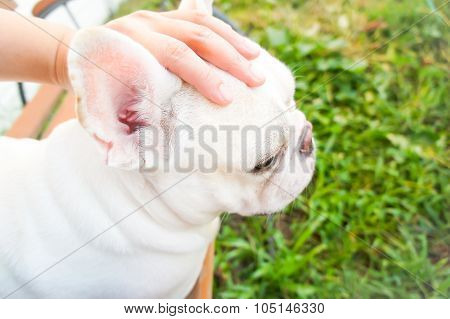 Grope A Dog,French bulldog