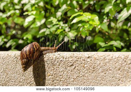 Snail Climbing Wall.