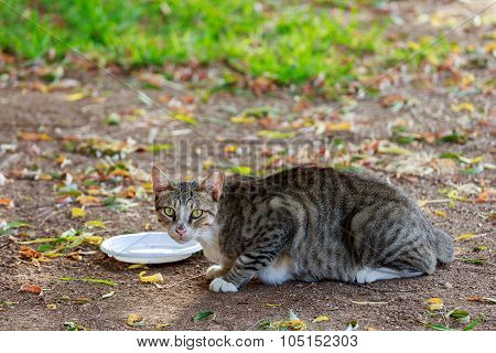 Homeless Cat Near Empty Plate