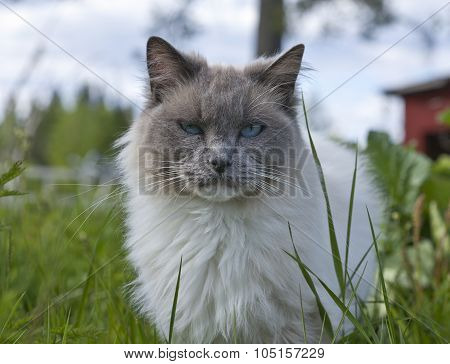 A cat walks around in a garden.