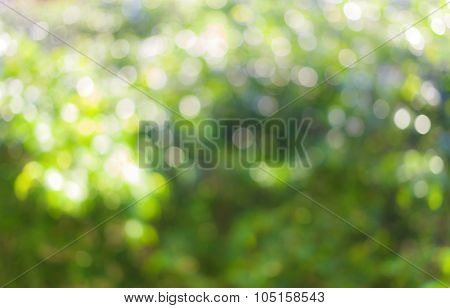 Green natural blurred bokeh background from tree