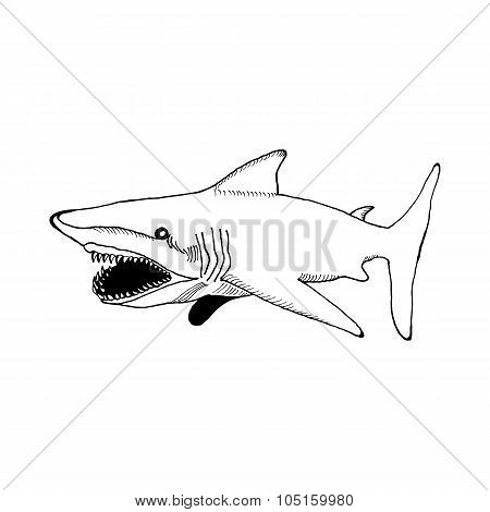hand draw a shark with an open mouth and sharp teeth in the style of a sketch for posters, cards, ta
