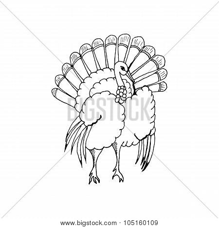 hand draw a turkey in the style of the sketch for the decoration of cards, gifts, textiles, coloring
