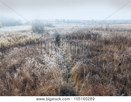 Landscape Of Dry Grass  Covered With Frost Cold Foggy Morning