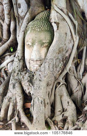 Buddha head in tree roots (Ayuthya, Thailand)
