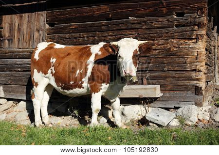 Cow And Hut