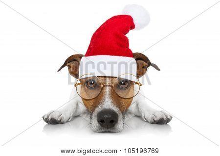 Santa Claus Dog