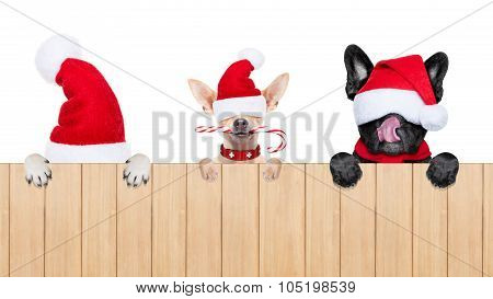 Row Of Santa Claus Dogs