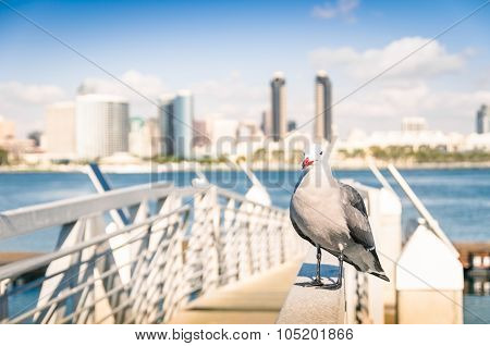Seagull At San Diego Waterfront With Skyline View - Skyscrapers From Coronado Island In California