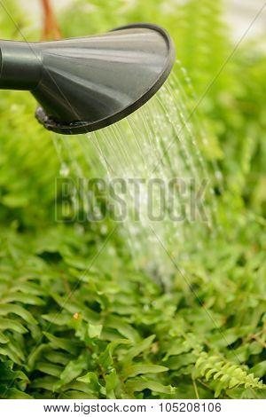 Professional florist holding water pot