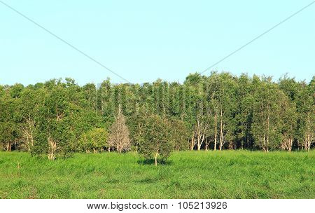 Peat Swamp Forest In Thailand