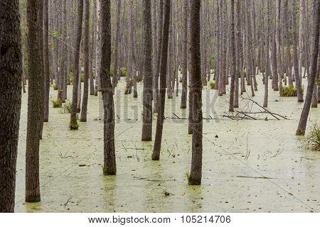 Green Wet Swamp