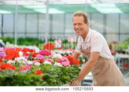 Professional florist workin gin the greenhouse