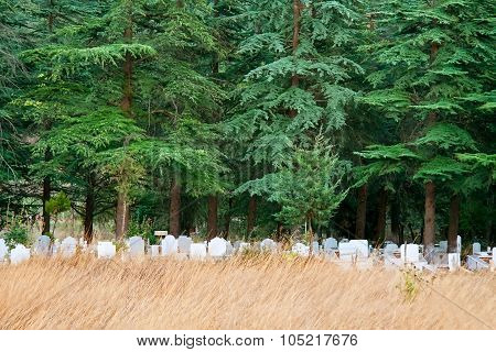 Lonely Graveyard Under Pine Trees