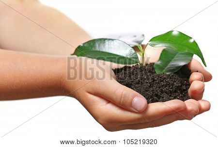 Child handful with soil and small green plant isolated on white