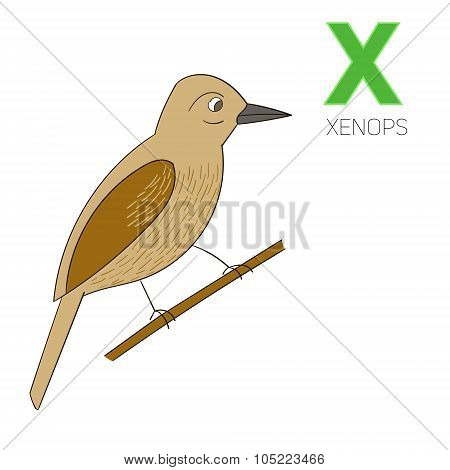 Alphabet letter X xenops children vector