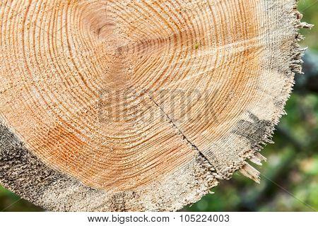 Fresh Wooden Log Section Closeup Photo