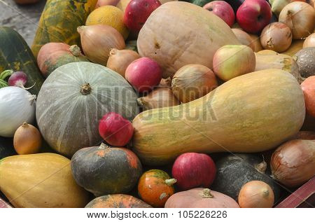 Autumn Harvest. Pumpkin, Apples, Onions, Cucumbers, Radishes