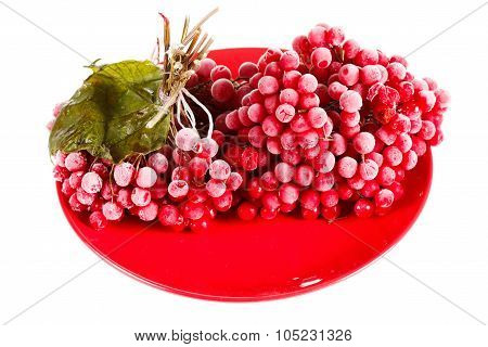 Viburnum On The Plate, Frozen For Long Time Storage, White Background