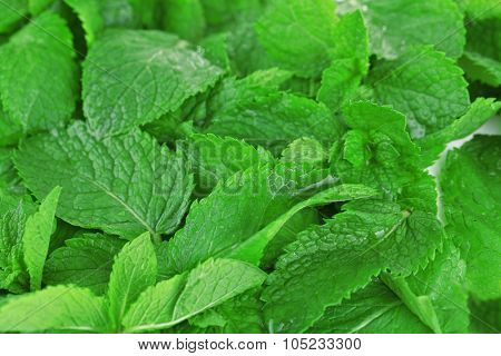 Fresh mint background, macro