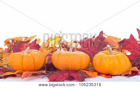 Three Mini Pumpkins