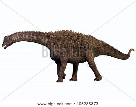 Ampelosaurus On White