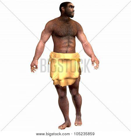 Homo Erectus Male
