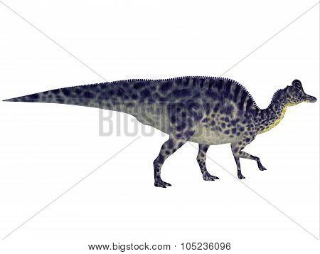 Velafrons Dinosaur Profile