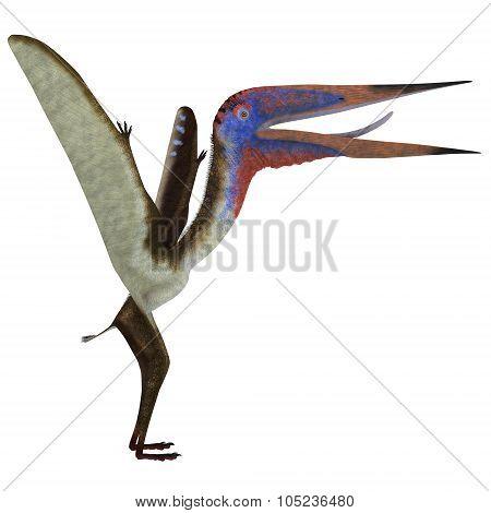Zhejiangopterus Reptile