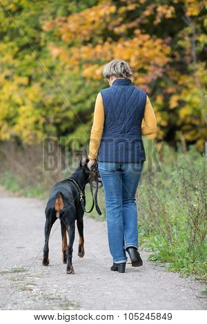 Back view of the walking with dobermann woman in a park.