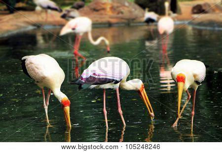 Birds Feeding In The Lake