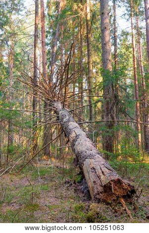 Rotten Fallen Tree In The Forest - Vertical Photo