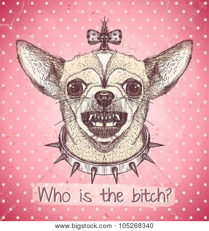 Hand drawn graphic poster of angry chihuahua  dog wearing a studded collar and bow, against pink polka dots  backdrop, who is the bitch quote card.