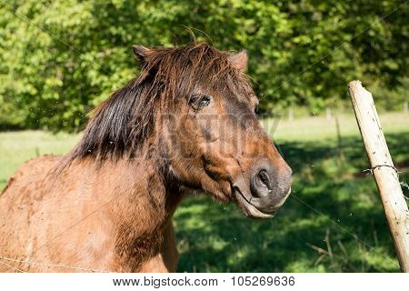 thoroughbred horse on farm side view
