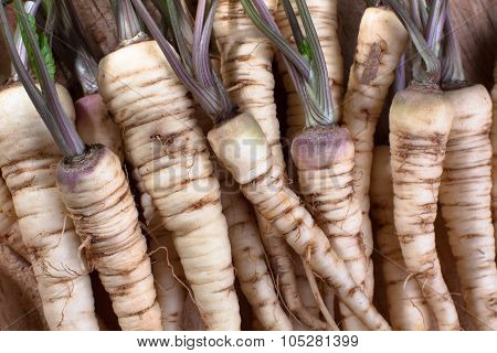 Fresh Roots Of Parsley