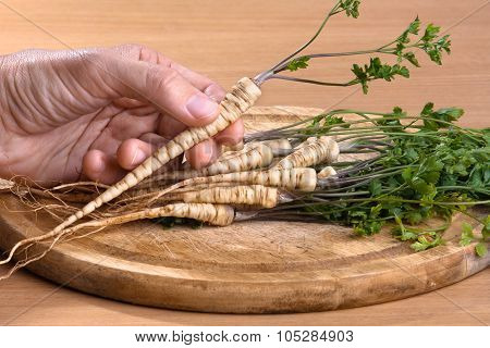Hand With Fresh Parsley Roots, Closeup