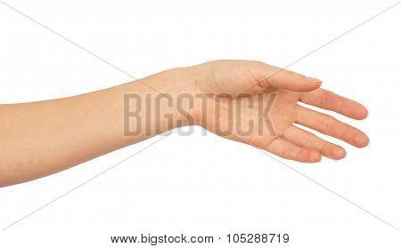 Humans left hand