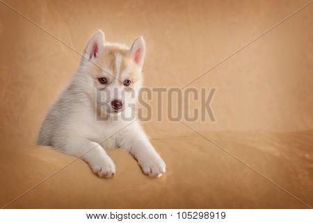 Cute puppy lying on its side