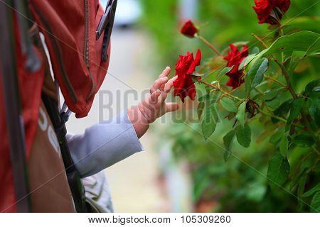 Lovely infant reaches for the flower