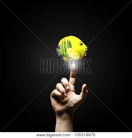 Male hand pointing with finger at big exotic fish. Success in business